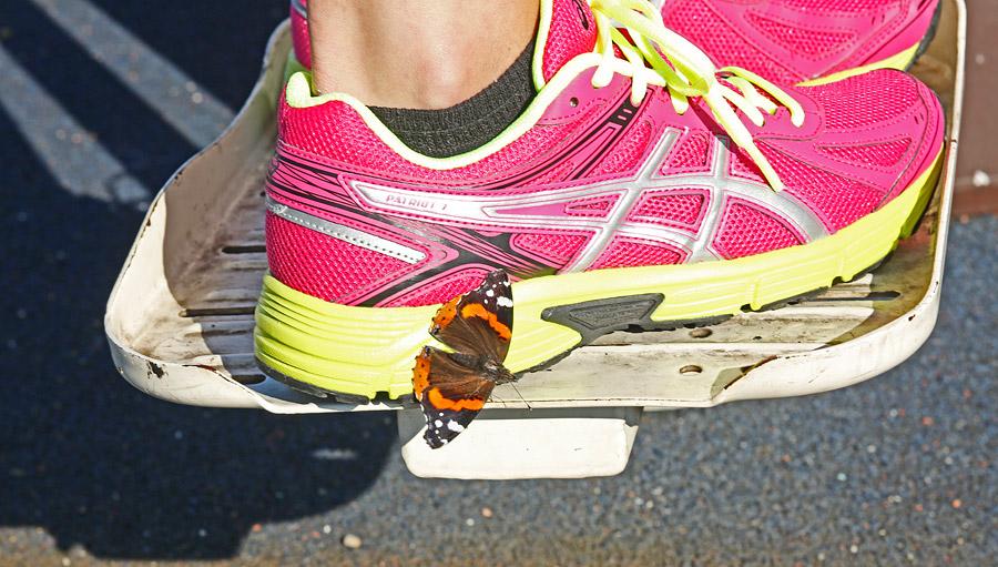 Motyl na butach